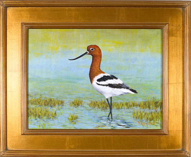 American Avocet  Oil by Albert Faggard