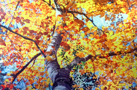 First Place - River Bottom Maple by Lisa Richardson, Metal Print, $175